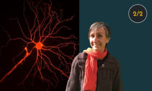 Neuroscience and the memory palace
